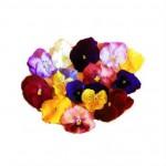 Edible Gourmet Flowers